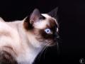 Tais Magic Cat
